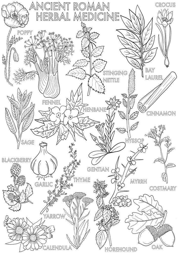 Mutiple different plants used for healing by Romans
